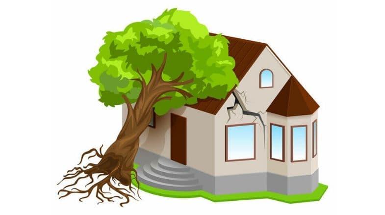 Seguro de Daños por Desastres Naturales para créditos vigentes.